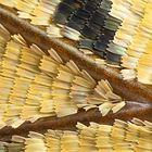 Charaxes tiridates, Flügelausschnitt