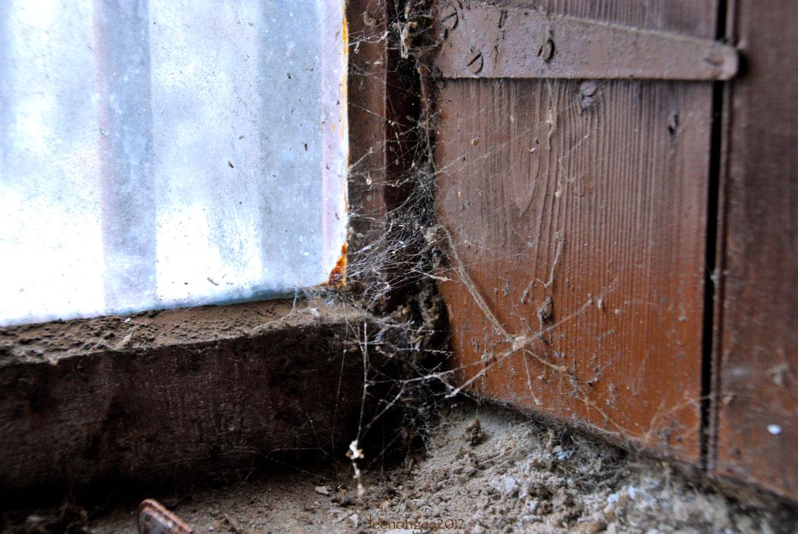 Charlotte's web at the Tamdhu Distillery, Speyside