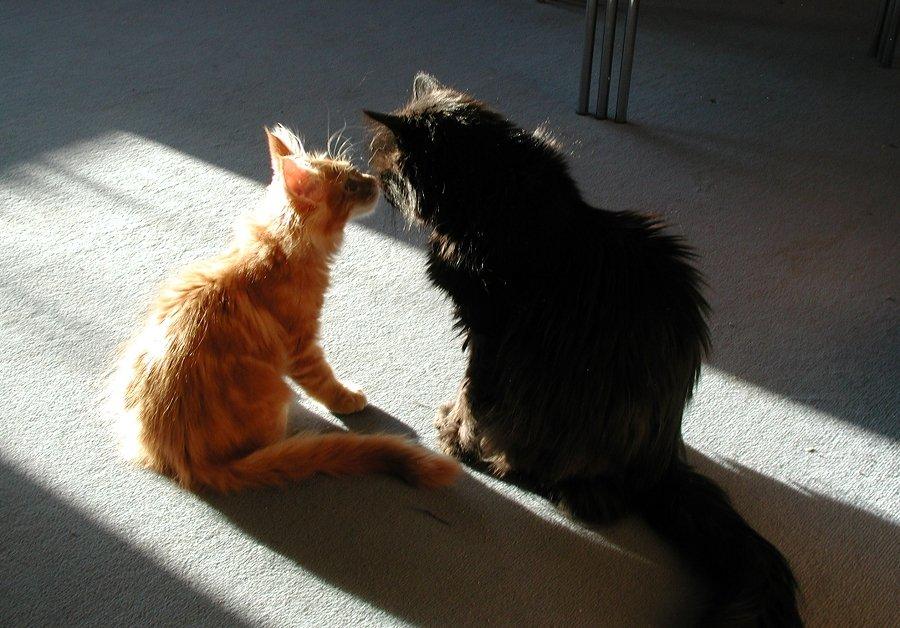 Charly & Diego