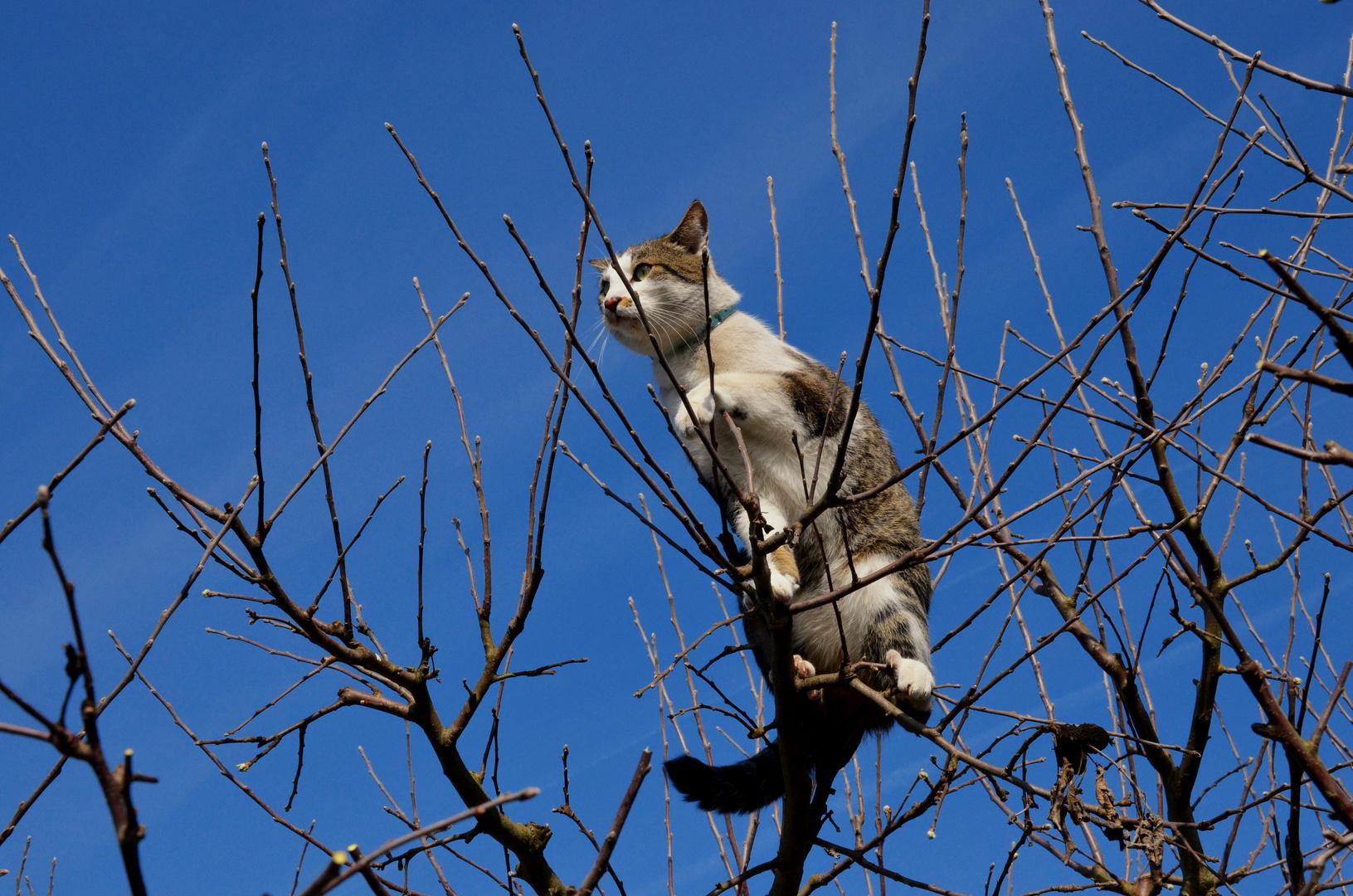 Charly ... im Apfelbaum