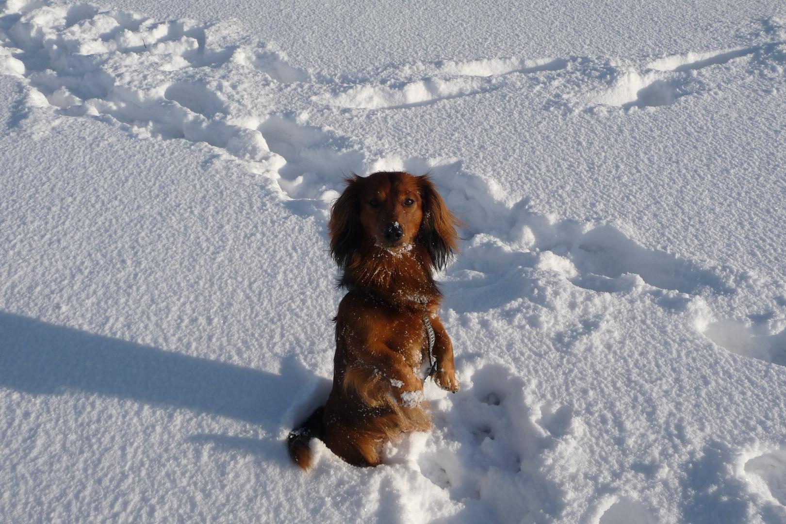 Charly mag keinen Schnee an seinen Pfoten