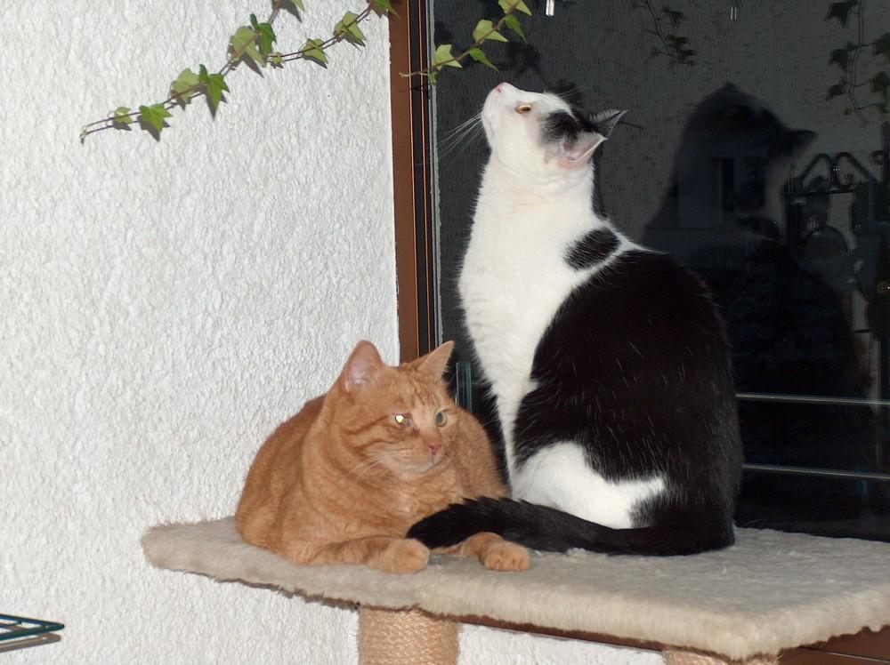 Charly und Chico