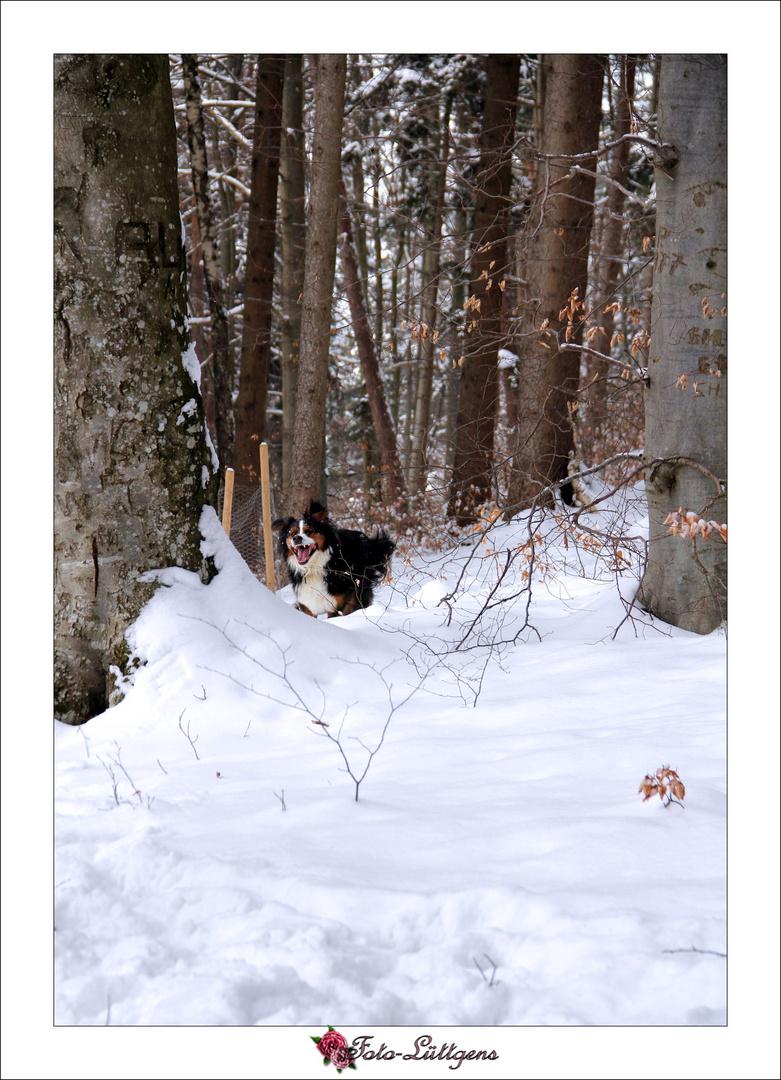 Charly und der Schnee