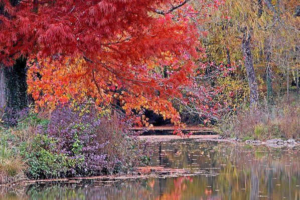 charme de l'automne