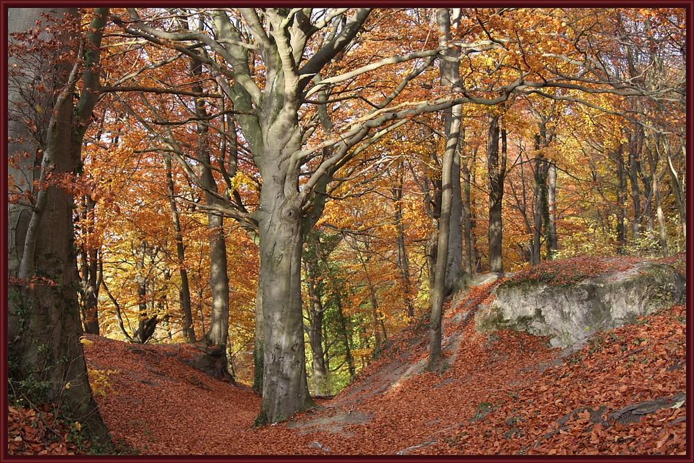 charme dela forêt