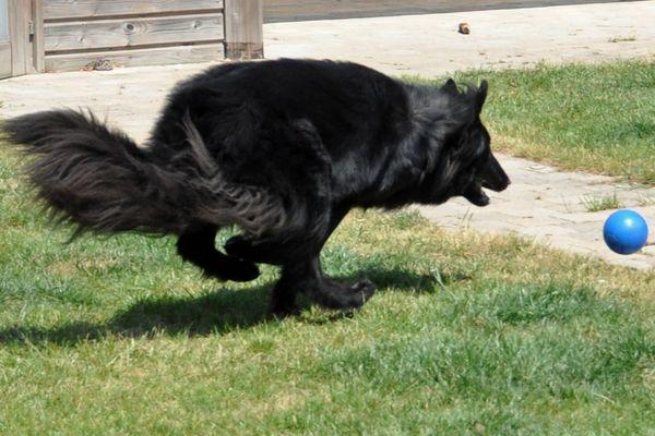 chasing a ball - nearly got it