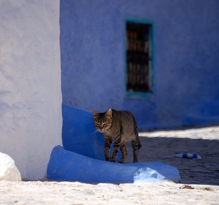 Chat à Chefchaouen Maroc