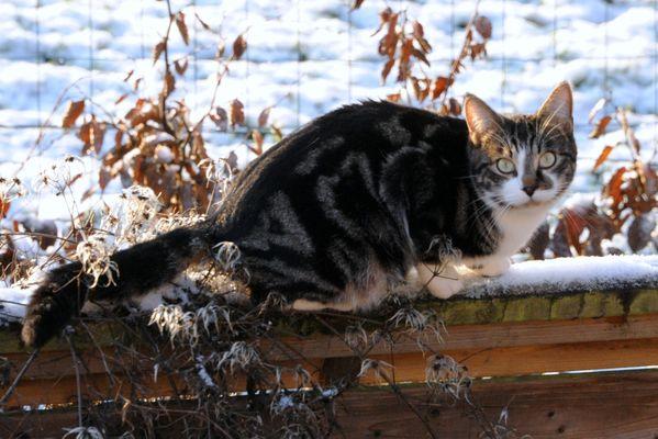 chat a l'affut