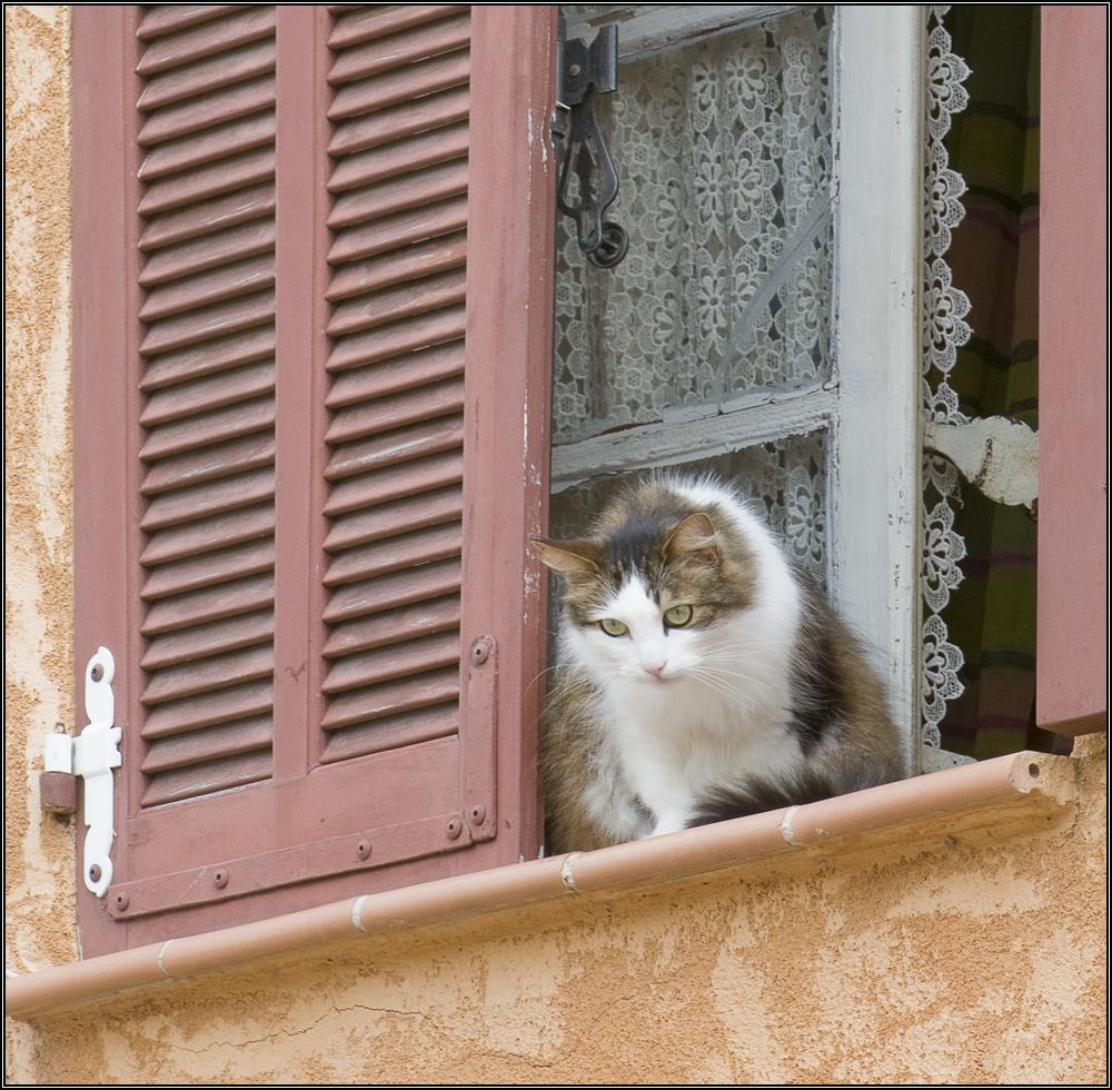 Chat à sa fenêtre