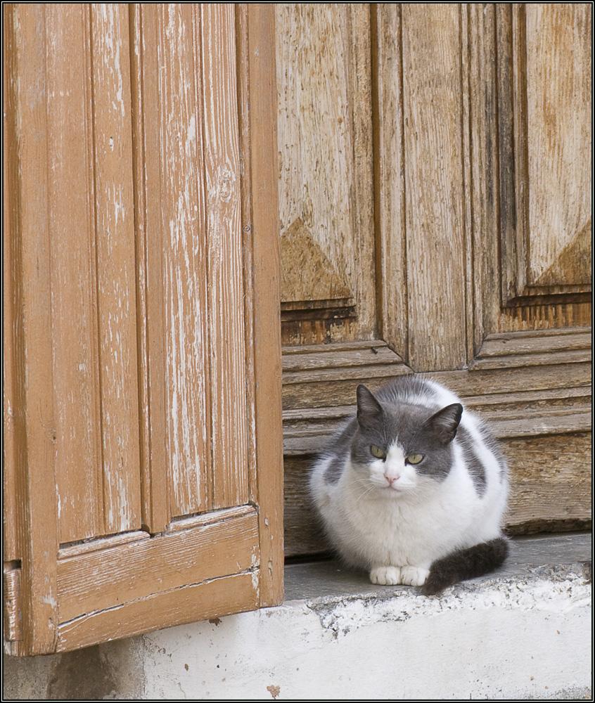 Chat à sa porte