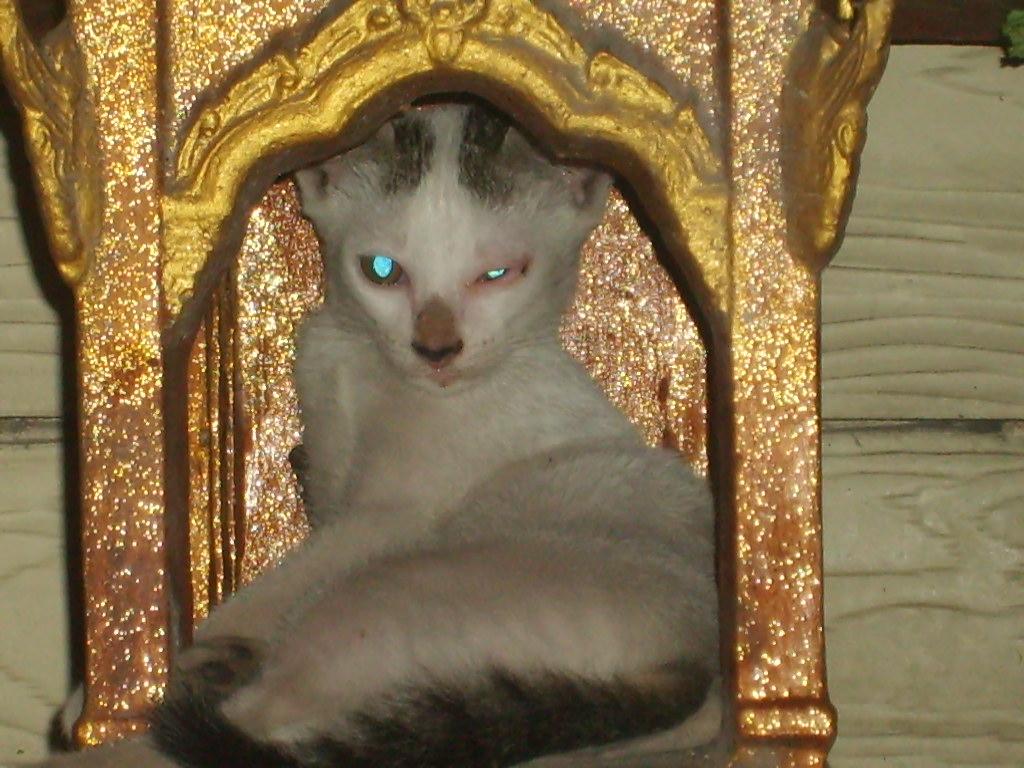 chat au repos