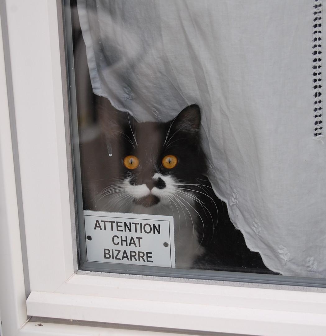 chat bizarre