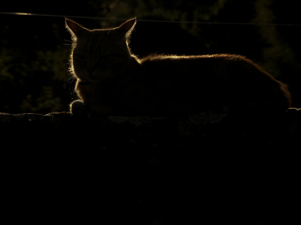 Chat contre-jour, test