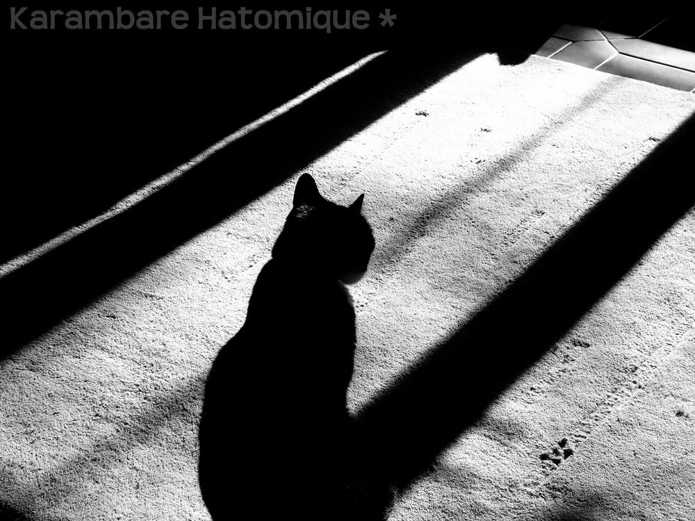 Chat dans l'ombre