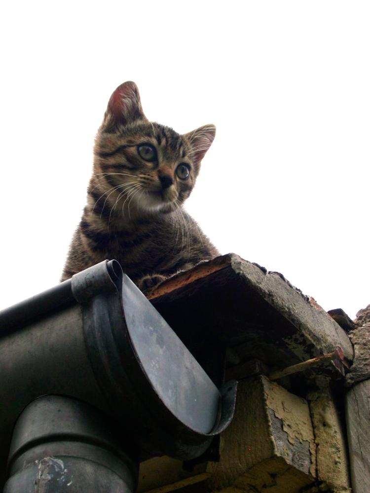 Chat... de gouttière