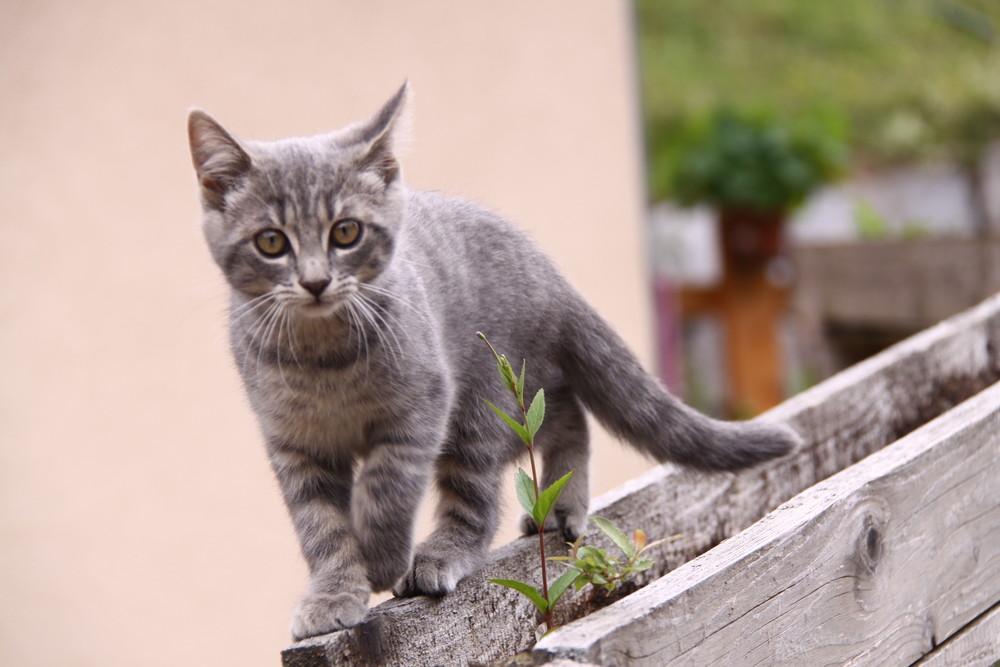 chat de gouttière?