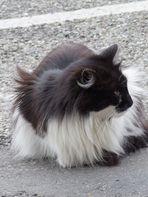 chat de rue.