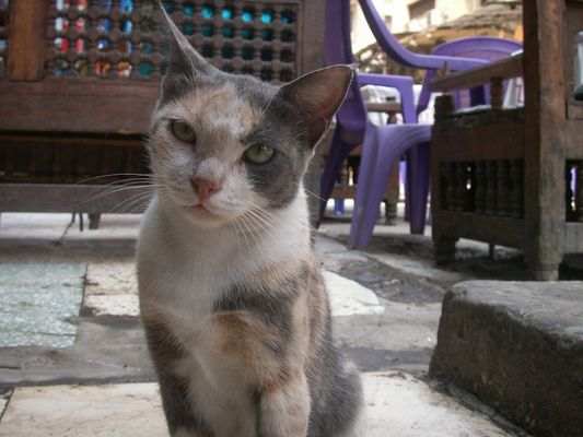 Chat D'Egypte