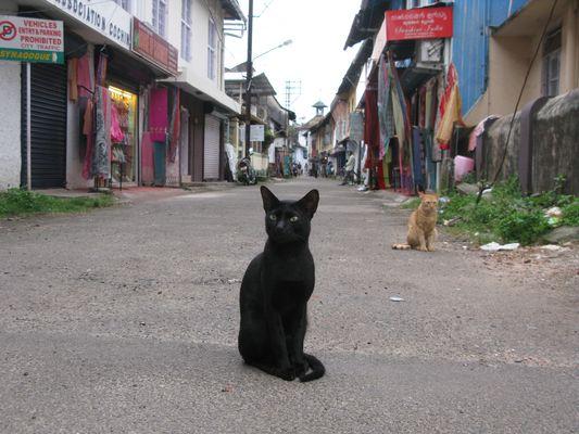 chat des rues