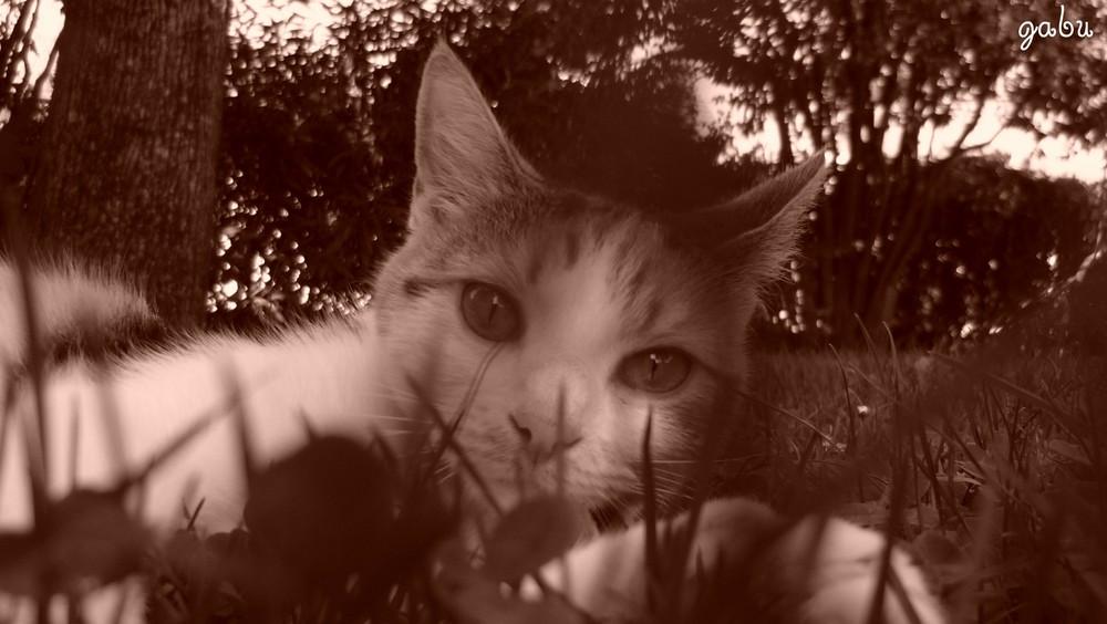 chat en sépia