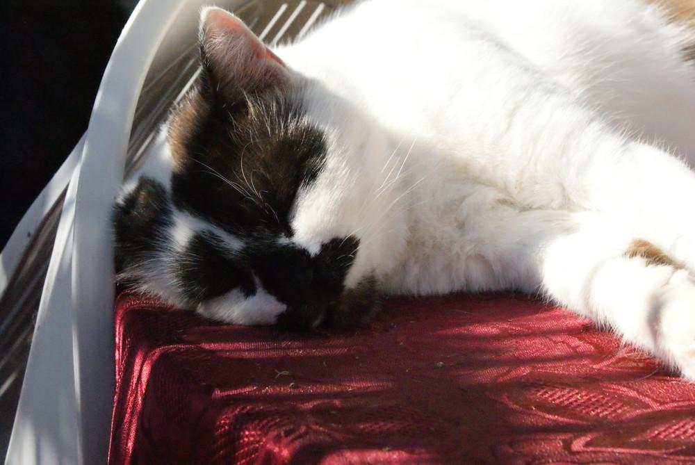 chat endormis