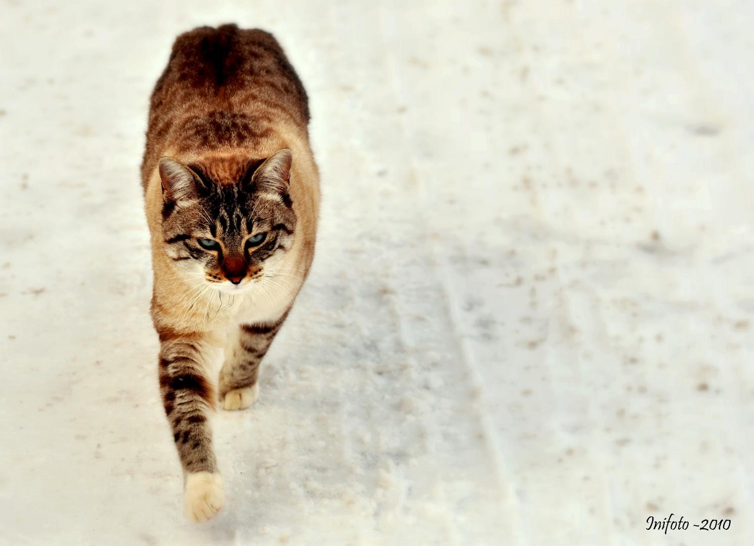 Chat - Lynx