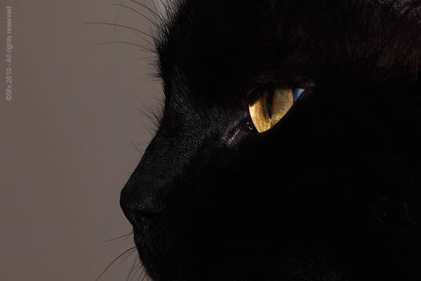 ...Chat me regarde, D'abord !!..
