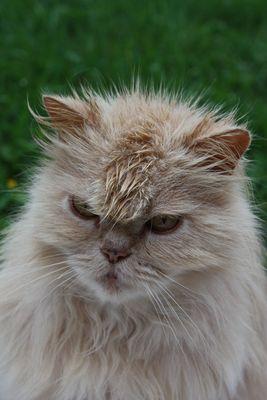 chat mouillé