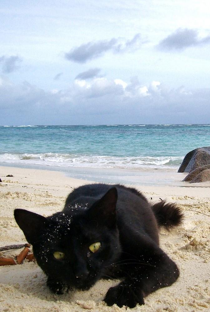 Chat noir en vacances