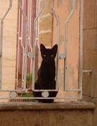 Chat noir Essaouira