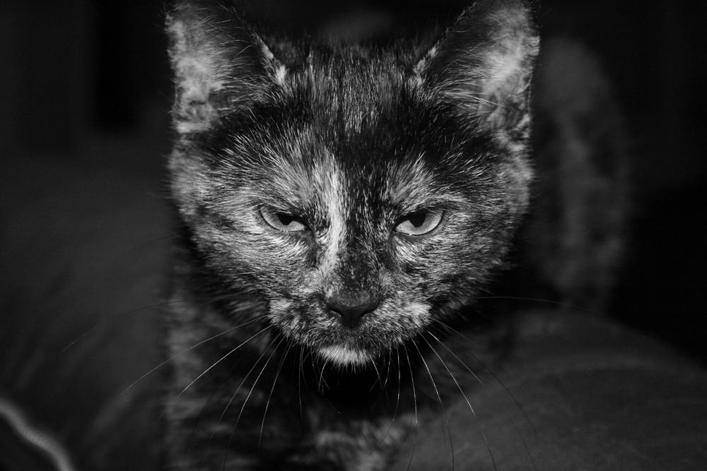 chat rigole pas ...