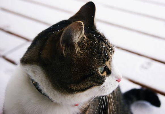 chat sous la neige !