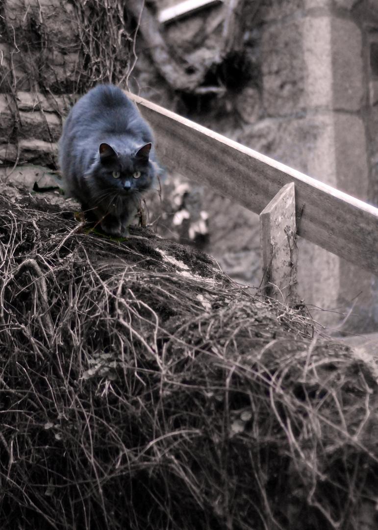 chat sur escalier