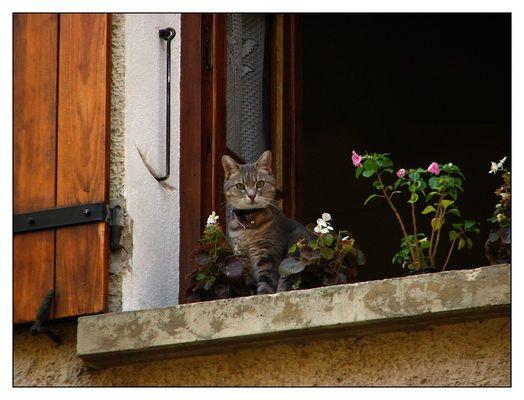 Chat sur fenêtre