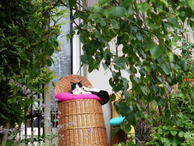 Chat sur son trône