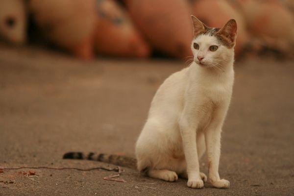 chat tunisien