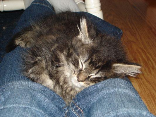 Chaton endormit