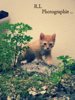 Chaton, marche dans l'espoir de devenir grand ... :)