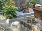 chats au cimetière de Montmartre