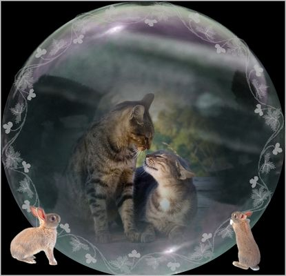 * chats - bulle *