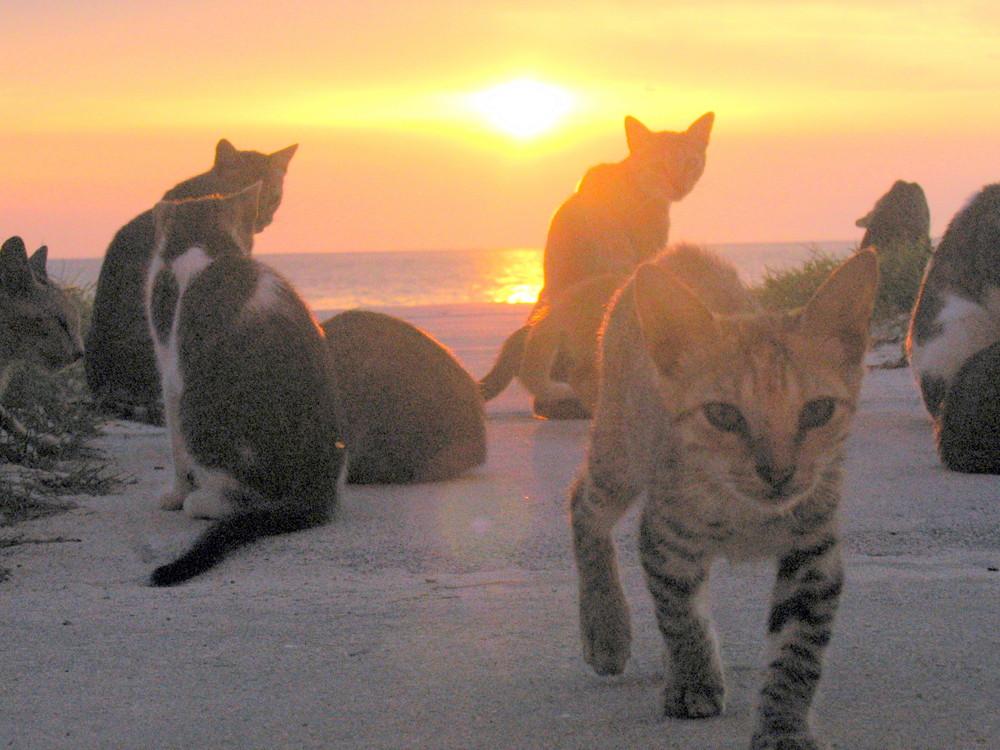 chats de cuba