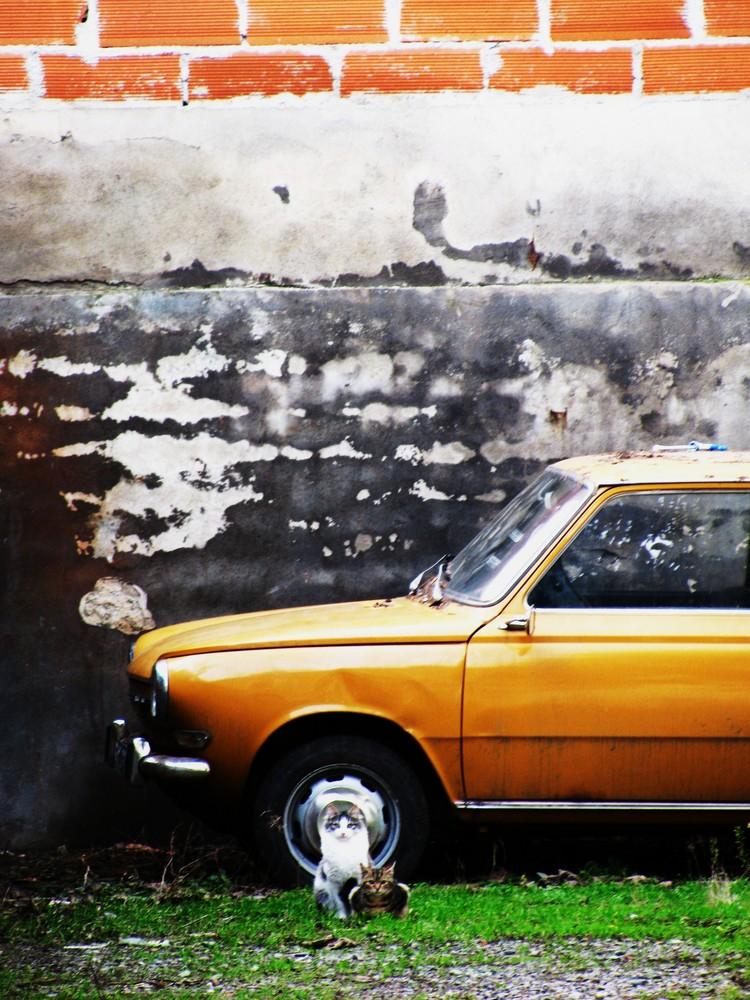 Chats des rues devant une voiture abandonnée, Toulouse.