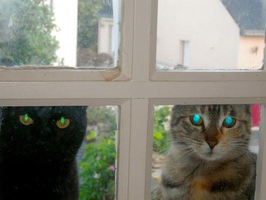 chats flashés