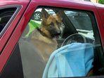 Chauffeur...