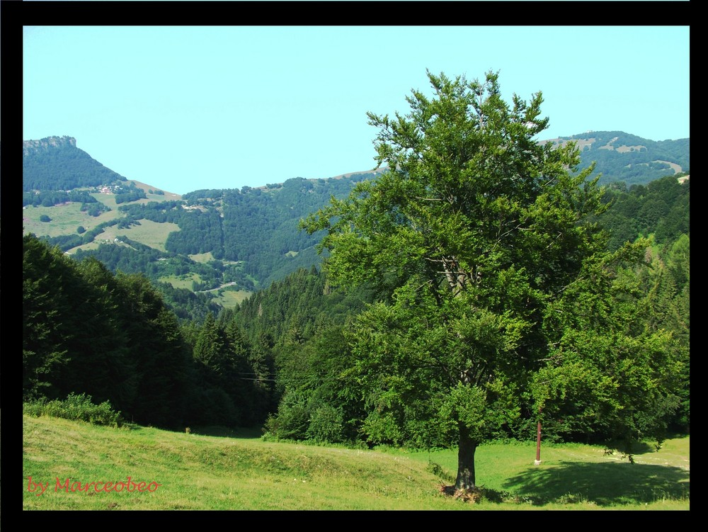 Che bella la montagna.
