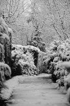 Chemin dans la neige