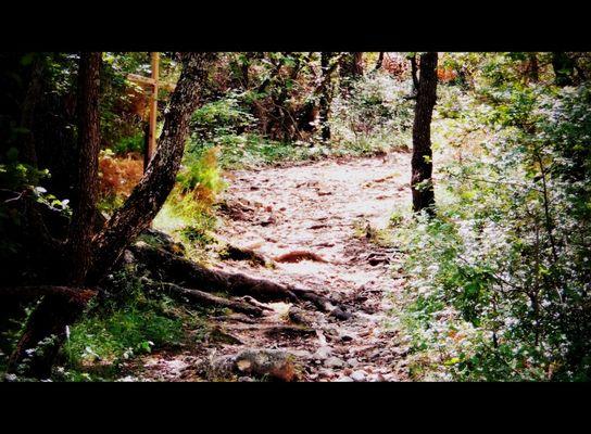 chemin de croix de mon petit village