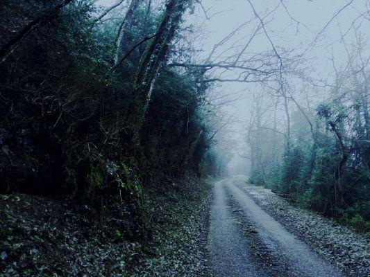 Chemin de solitude.