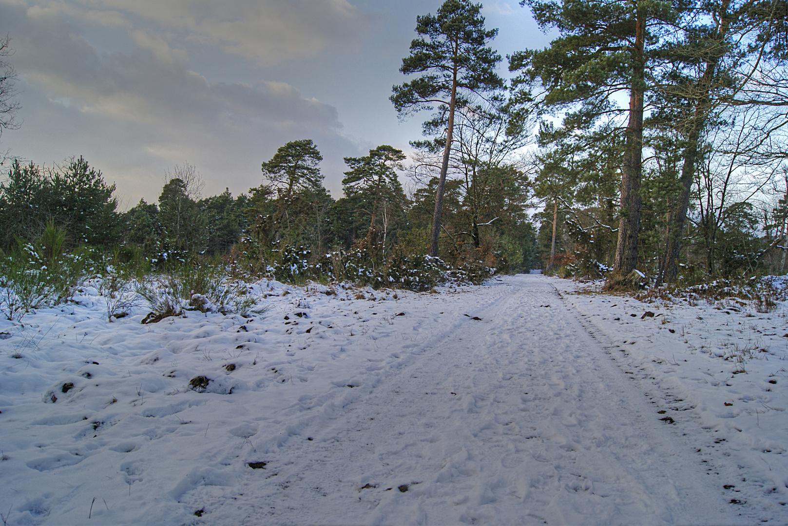 chemin enneigé, forêt de Fontainebleau