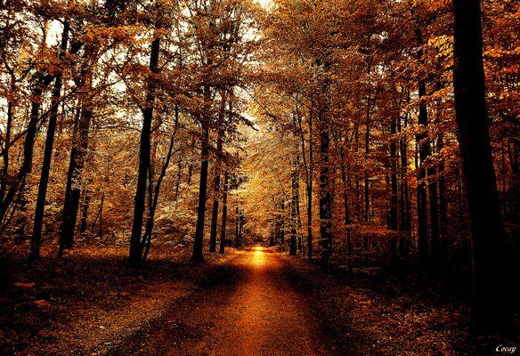 """"""" Chemin Ondes de chaleur """" ..."""